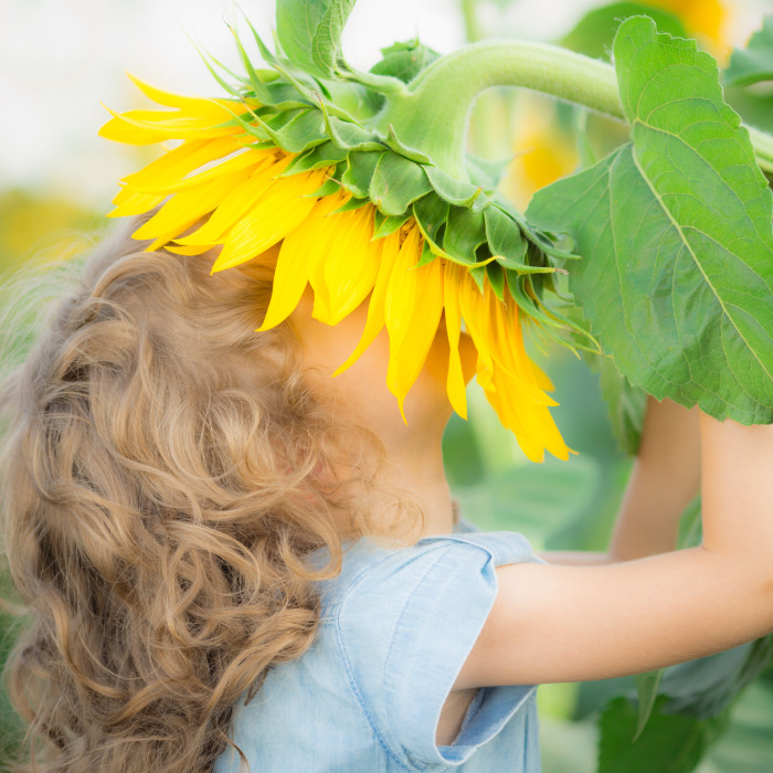 Girl smelling sunflower